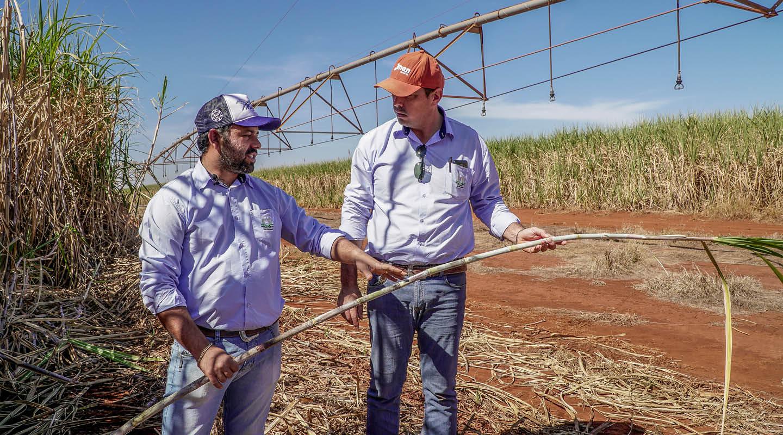 Sugarcane blog 3