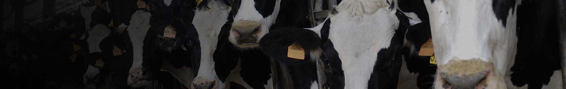dairy farm management