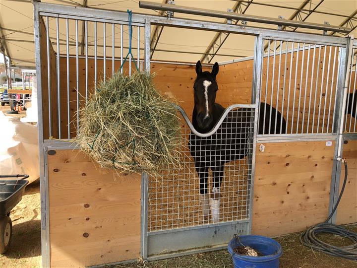 Galvanized Horse Stalls